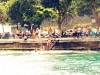 swimming-in-the-bosphorus-men-only